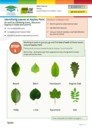 Click to view Resource 108011 Identifying trees at Appley Park