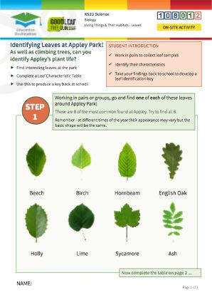 Click to view Resource 108012 Identifying trees at Appley Park