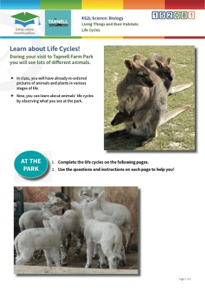 Click to view Resource 152081 Life Cycle Study at Tapnell