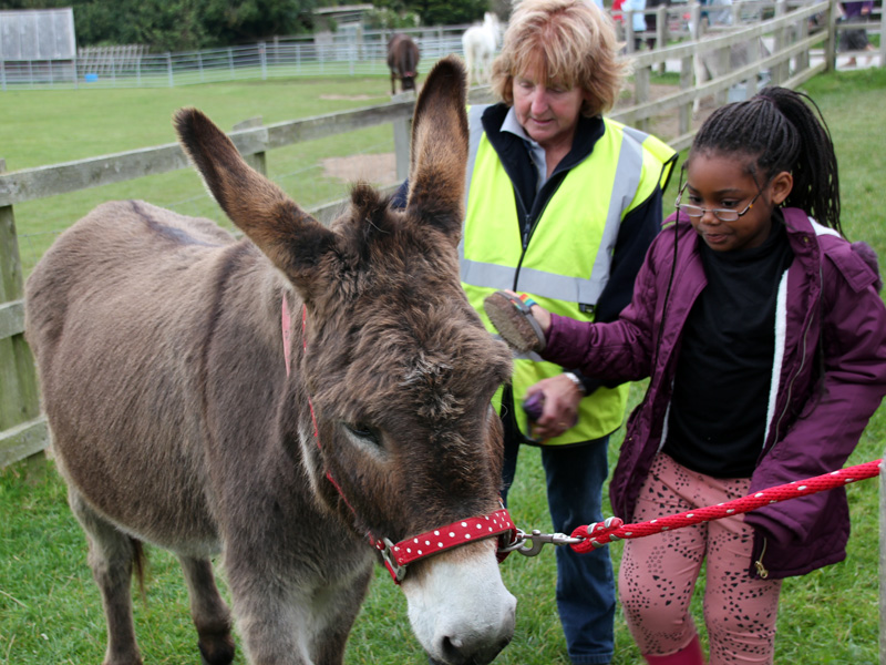 Isle of Wight Donkey Sanctuary gallery image