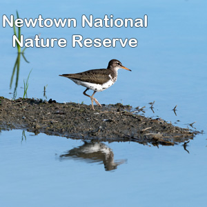 Click for Newtown Nature Reserve