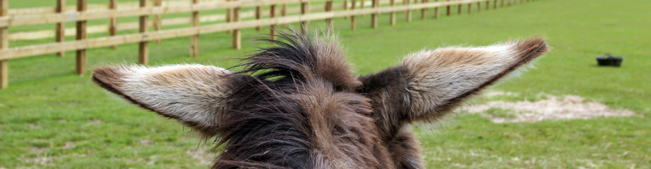 Picture of Isle of Wight Donkey Sanctuary